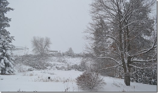 2015-01-05 -back forty in winter