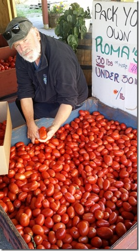 2014-09-13 getting romas in Keremeos