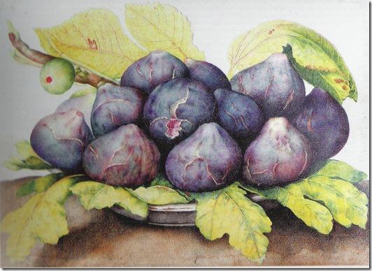 garzoni - figs