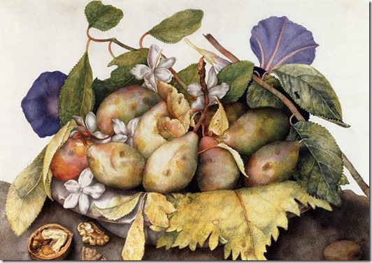 garzoni - plums and walnuts