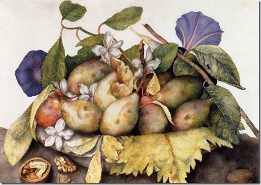 garzoni - plums and walnuts